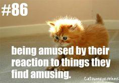 catownerproblems