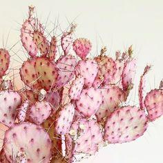 Pink cactus #Cactus #Cuemars