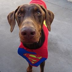 Some people think it's CRAZY that I am able to be head chef of my own business (and #tastetester extraordinaire) make time to play with #friends and always give kisses to my #foreverfamily ... What they don't know is that I am #SUPERMAN!  remember - you can do and BE anything you put your mind to! #thursdaymotivation