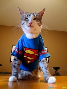 31aa763c6a My cat hasn t quite adjusted to his superpowers yet.https
