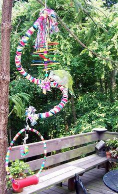 Home-made Play Gym And Toys - DIY: Do It Yourself! - Quaker Parrot Forum Diy Parrot Toys, Diy Bird Toys, Diy Cat Toys, Cockatiel, Budgies, Parrots, Crazy Bird, Play Gym, Bird Cages