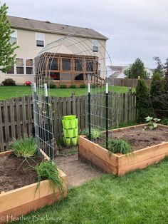 New Raised Cedar Beds and a Hog Panel Trellis Garden Arch Trellis, Diy Garden Fence, Garden Arches, Backyard Garden Design, Raised Garden Beds, Backyard Landscaping, Raised Bed Fencing, Cedar Trellis, Garden Boxes