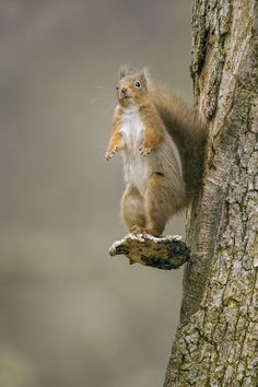 """Look Ma,no hands! by Sylvia Fresson, looks more like the squirrel is saying """"You want me to jump where?"""""""
