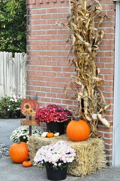 Outdoor fall decor - mums, hay bale, pumpkins, Harvest sign, corn stalks & bundle of indian corn. By Chrisy's Creations