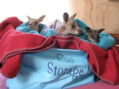 Roo Storage. Wildhaven, St Andrews Wildlife Shelter, Australia.