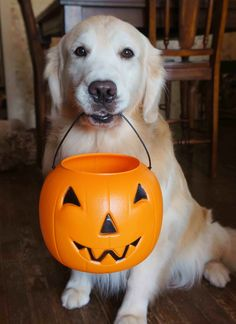Jack is waiting for Halloween. He wants to fill his pumpkin with lots of his favorite treats.