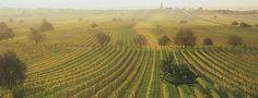 Vineyards in Burgenland, Austria  http://www.austria.info/us/austria-wine-country/austria-s-eastern-edge-1084229.html