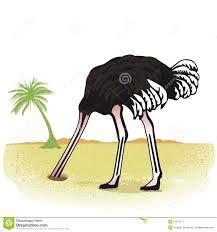 Картинки по запросу страус