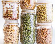 Grow Nutrient-Dense Sprouts for a Winter Boost - Wholeheartedly Healthy