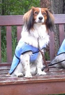 Learning about dog breeds.  Made by De - Quality Custom Dog Coats and Dog Clothing - My Dog Blog
