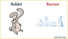 Animal And Their Homes With Pictures, Download Pdf & PPt Animal House Names, Animals And Their Homes, Rabbit Life, List Of Animals, Dog Life, Environment, Teacher, Pictures, Photos