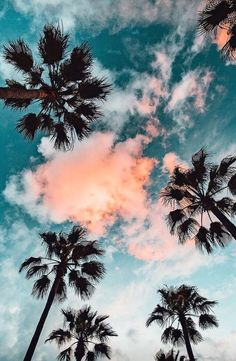 The perfect view - #palmtrees #sunset #hawaii #vacationhawaii