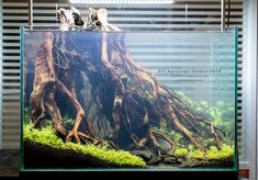 Acuario3web (@acuario3web) | Twitter Planted Aquarium, Betta Aquarium, Tropical Fish Aquarium, Aquarium Setup, Tropical Fish Tanks, Betta Fish Tank, Home Aquarium, Nature Aquarium, Aquarium Design