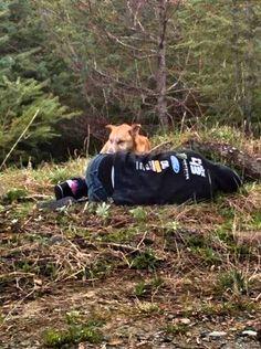 Source:  Lost & Found Pets WA State