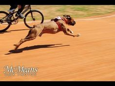 Dog vs Human BMX Race - Smart dog - Best video I've seen all day, you have to laugh about that.