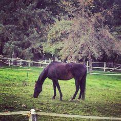 Beauty...I heart Horses!