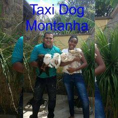 TAXI DOG MONTANHA TRANSPORTE DE ANIMAIS NO RIO DE JANEIRO: 6 LULU DA POMERÂNEA