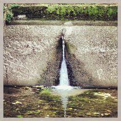 Buona giornata ☔️ #tempo #di #merda #pioggia #grigio #mi #milano #milancity #it #italy #instamoment #instagram #hastags #naviglio #foglie #acqua #kiss