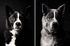 Dog Years: Faithful Friends Then & Now Photography Book by Amanda Jones - Dog Milk Amanda Jones, Book Photography, Animal Photography, Dog Photos, Dog Pictures, Side Portrait, Dog Milk, Dog Ages, Dog Years