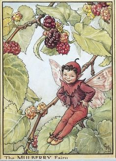 Illustration for the Mulberry Fairy from Flower Fairies of the Trees. A young boy fairy sits in a fruiting mulberry tree with his hands on his hips and his legs stretched out in front of him.  										   																										Author / Illustrator  								Cicely Mary Barker