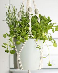 Hanging indoor herb garden.. Dining room windows.