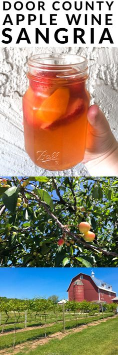 Perfect Image, Perfect Photo, Love Photos, Cool Pictures, Cherry Products, Sangria Ingredients, Apple Wine, Honeycrisp Apples, Sangria Recipes