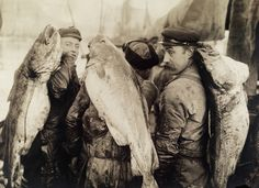 Four-foot long cod are slung across the backs of cod fishermen, February 1915.Photograph by A. B. Wiltse, National Geographic