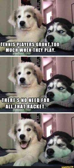 dog, pun, funny, joke