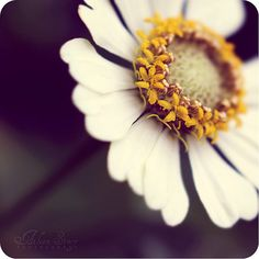 Flower - so delicate and beautiful.