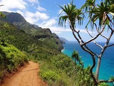 Hiking trail on the Na poli Coast on Kauai! Not sure which Hawaiian island to visit this year? Read this travel guide on what to expect on each of the Hawaiian islands. Including things to do on Maui, The Big Island, Kauai, Oahu and Honolulu! Kauai Hawaii, Oahu, Hawaii Vacation, Hawaii Travel, Tropical Vacations, Hawaii News, Blue Hawaii, Italy Vacation, Bryce Canyon