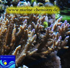 spurenelemente i. meerwasser-aqua, products from MC marine chemistry.