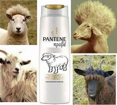 Funny memes for kids lol thoughts 38 trendy Ideas Funny Greek Quotes, Greek Memes, Funny Good Morning Quotes, Funny School Memes, Funny Jokes, Happy Animals, Funny Animals, Funny Christmas Wishes, Pantene