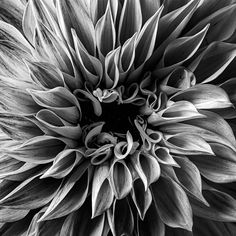 Macro Flower Photography   Flower Photography   Abstract Photography   Photography   Abstract Art   Wall Decor   Wall Art   Art   Photo Art   Home Decor Abstract Photography, Flower Photography, Macro Flower, Dahlia, Wall Art Decor, Photo Art, Abstract Art, Black And White, Gallery