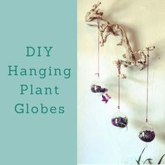 Sustainable fashion brand and lifestyle company. Diy Hanging, Hanging Plants, Creative Labs, December 11, Globes, Sustainable Fashion, Fashion Brand, Lavender, Elephant