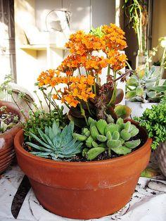 ideal centerpieces, different colour flower though.