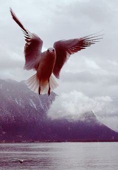 Montreux, Switzerland, Html, Photos, Places, Animals, Lugares, Pictures, Animaux