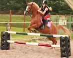 ≥ veulen KWPN merrie springen en dressuur - Paarden - Marktplaats.nl