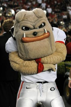 Georgia Bulldogs mascot, Hairy Dawg from the University of Georgia in Athens. No one cheers on the UGA Football team or is as big of a fan! Georgia Bulldog Mascot, Georgia Bulldogs Football, University Of Georgia, Sick, Helmet Logo, Georgia Girls, Pittsburgh Steelers, Dallas Cowboys
