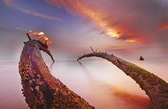 """Mystical Tree,"" photo by Razali Ahmad from '500px is Photography'"