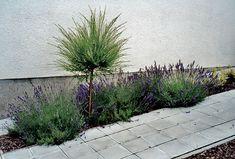 Krásna záhrada po celý rok 11