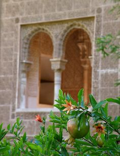 Pomegranate, Alhambra, Granada.  http://www.costatropicalevents.com/en/costa-tropical-events/andalusia/cities/granada.html