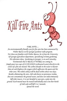 """How to Kill Fire Ants using Club Soda""  Just tried but because we've had so much rain the ants haven't been out since so I can't say whether it worked yet or not..."