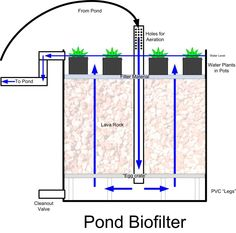 1000 images about filter on pinterest sump pond for What is the best pond filter