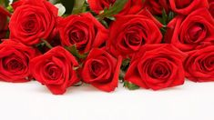 Red Roses on White Background HD desktop wallpaper Widescreen Red Flower Wallpaper, Red Wallpaper, Widescreen Wallpaper, Nature Wallpaper, Beautiful Red Roses Images, Most Beautiful Wallpaper, Amazing Flowers, Beautiful Pictures, White Background Hd