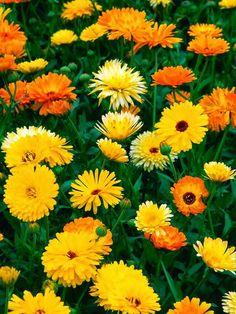 Queridos amigos,   Como sabem comecei a jardinar cedo com a minha avó que adorava plantar, semear, ter sempre o jardim cheio de flores e ar...