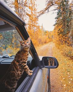 Road to paradise 🍂😸