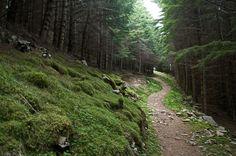 14 Breathtaking Scottish Walks To Add To Your Travel Bucket List