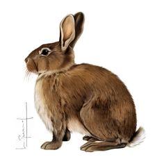 Rabbit, Animals, Illustrations, Drawings, Bunny, Rabbits, Animales, Animaux, Bunnies