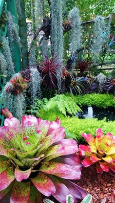 FESTIVAL OF FLOWERS: Spectacular garden of bromeliads, the most photographed, Puerto Rico.