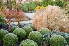 Winter garden, Sir Harold Hillier's